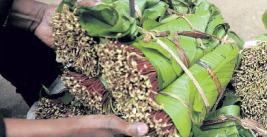 Vioski vya muguka vyaanza kubomolewa Mombasa