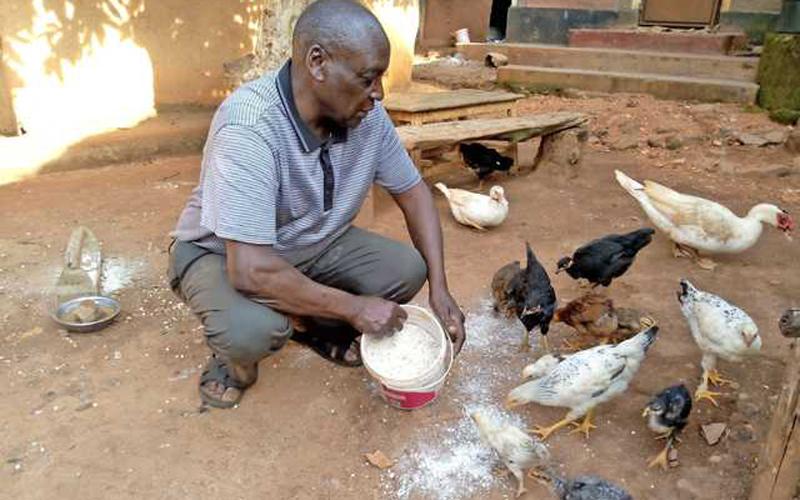 USHAURI: Ukitaka kunawiri katika ufugaji; hasa wa kuku, tafadhali jiundie lishe