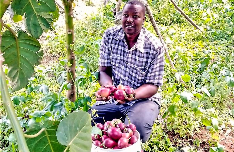 AKILIMALI: Mkulima anavyochuma kutokana na matundadamu