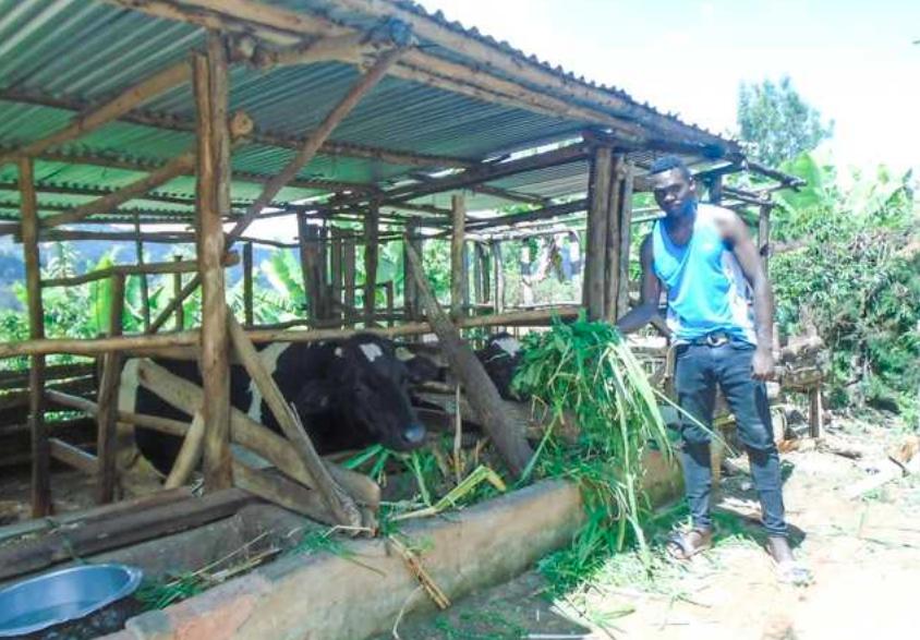 AKILIMALI: Mitishamba matibabu tosha kwa ng'ombe wake