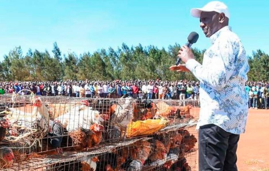 Ninauza mayai ya Sh1.5m kila siku – Ruto