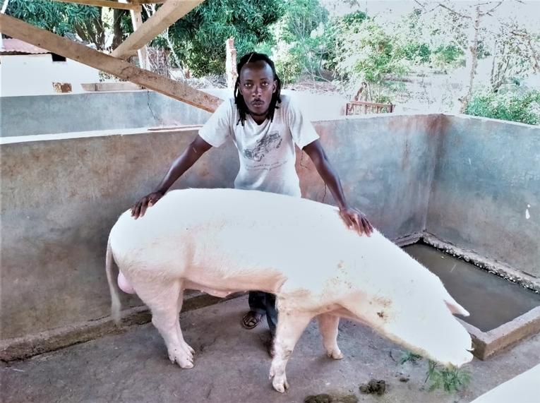 Ufugaji wa nguruwe unavyompa mkulima kipato Mwatate